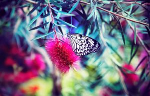 unsplash-melissa-chabot-butterfly-on-pink-flower